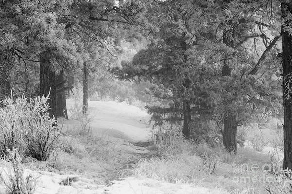 Photograph - Snow For Thanksgiving On Bald Mountain by Steve Krull