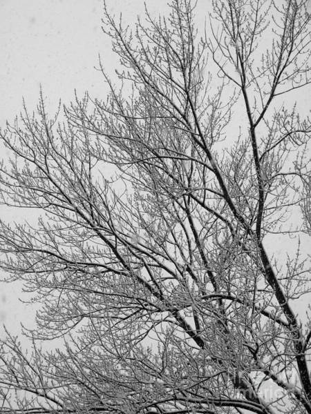 Photograph - Snow Frosted Tree Photograph by Kristen Fox