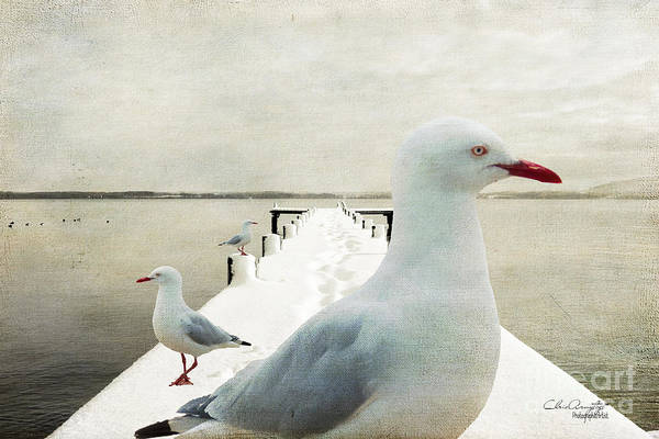 Photograph - Snow Gulls by Chris Armytage