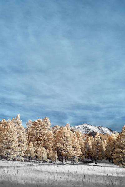 Flagstaff Photograph - Snow In Flagstaff by Jon Glaser