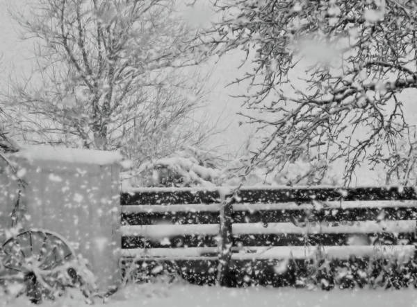Photograph - Snow In The Country by Mary Wolf