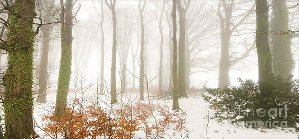 Photograph - Snow In The Woods by Colin Rayner