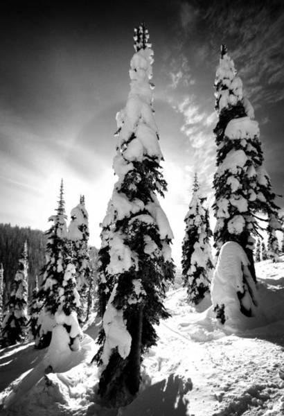 Snow Laden Tree Art Print