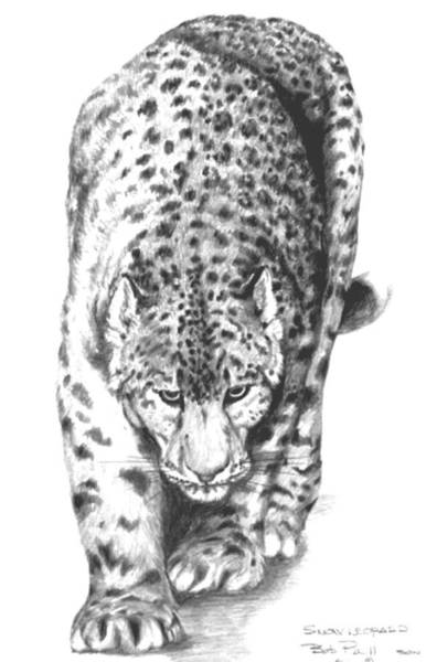 Bengal Tiger Drawing - Snow Leopard by Bob Patterson