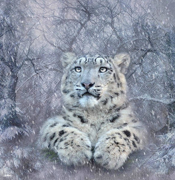 Wild Life Mixed Media - Snow Leopard Cub 02 by G Berry