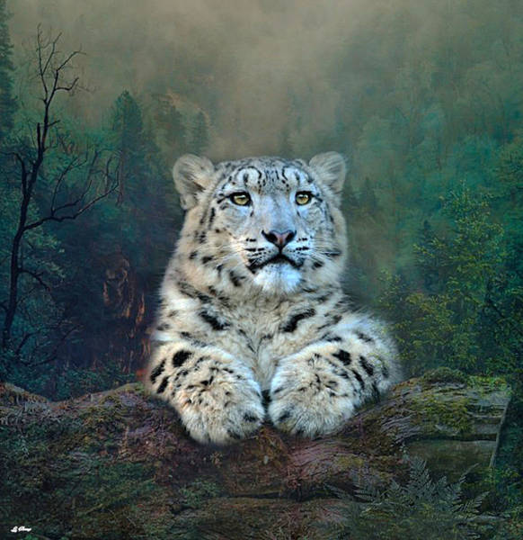 Wild Life Mixed Media - Snow Leopard Cub by G Berry