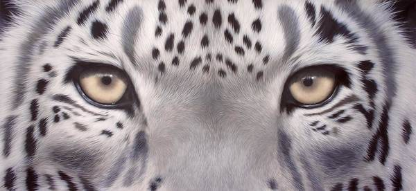 Snow Leopard Wall Art - Painting - Snow Leopard Eyes Painting by Rachel Stribbling