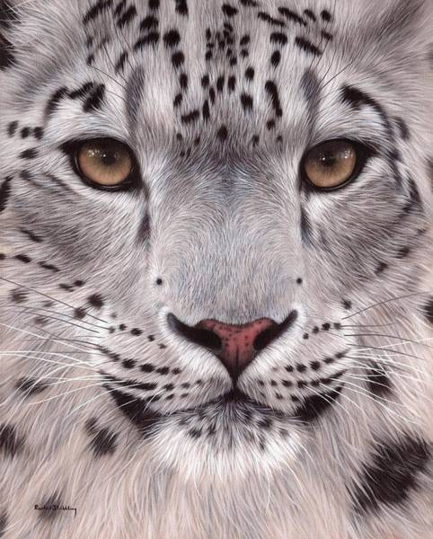 Big Cat Wall Art - Painting - Snow Leopard Face by Rachel Stribbling