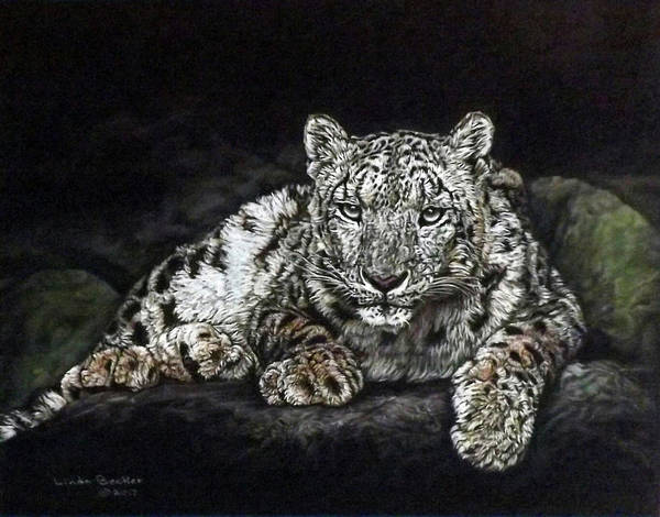 Painting - Snow Leopard by Linda Becker
