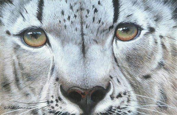 Painting - Snow Leopard by Mike Brown