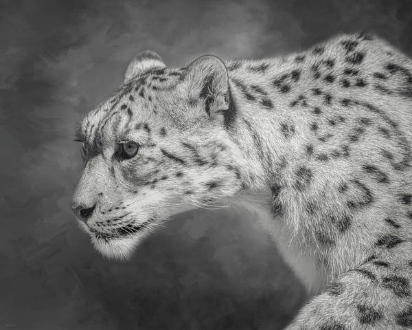 Digital Art - Snow Leopard by Nicole Wilde