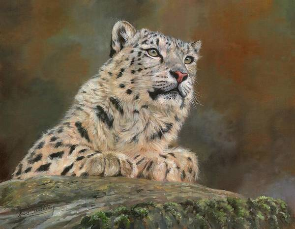 Snow Leopard Wall Art - Painting - Snow Leopard On Rock by David Stribbling