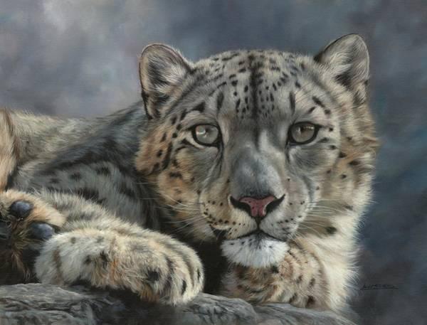 Snow Leopard Wall Art - Painting - Snow Leopard Portrait by David Stribbling