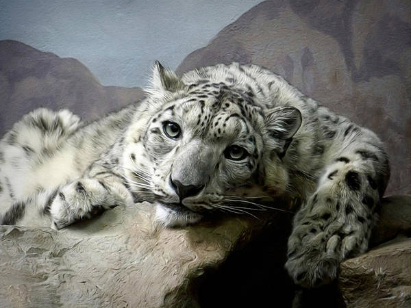 Big Cat Digital Art - Snow Leopard Relaxing Digital Art by Ernie Echols