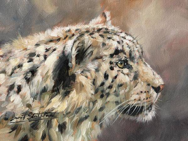 Snow Leopard Wall Art - Painting - Snow Leopard Study by David Stribbling