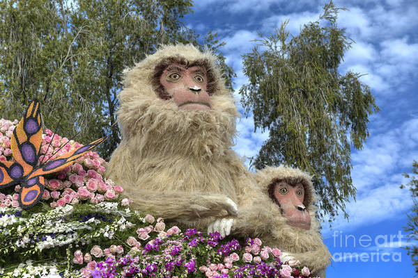Tournament Of Roses Photograph - Snow Monkey Japanese Macaque by David Zanzinger