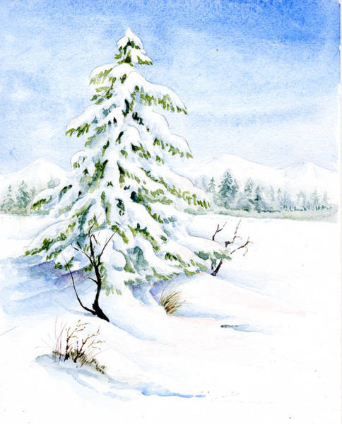 Snow On Evergreens Art Print
