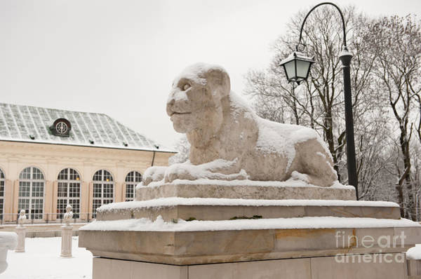 Wall Art - Photograph - Snow On Lion Statue by Arletta Cwalina