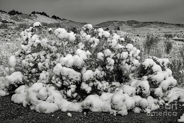 Photograph - Snow On The Bush by Jon Burch Photography