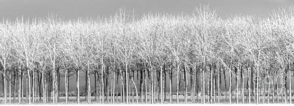 Photograph - Snow On Walnut Grove by Michael Arend