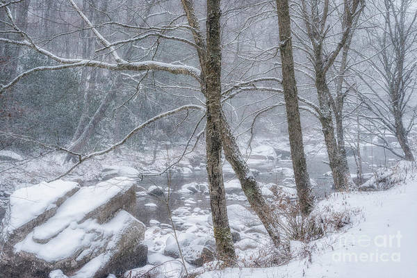 Photograph - Snow On Williams River by Thomas R Fletcher