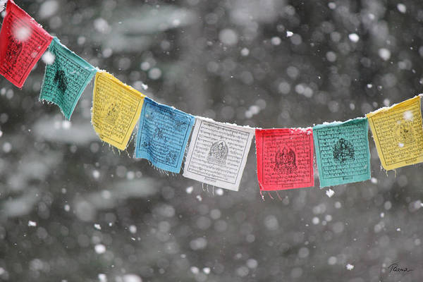 Photograph - Snow Prayers by Rasma Bertz