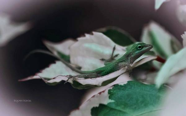 Green Anole Photograph - Snow Queen Hammock by DigiArt Diaries by Vicky B Fuller