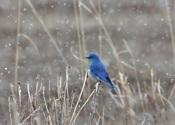 Photograph - Snow  by Ronnie and Frances Howard