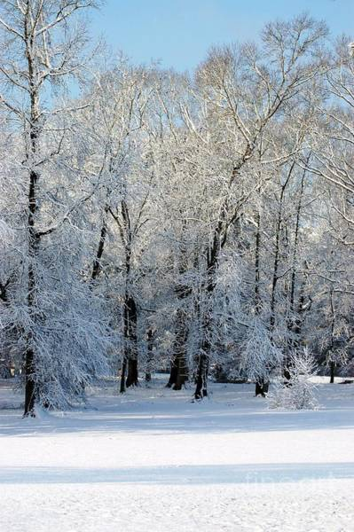 Photograph - Snow Scene One by Donna Bentley