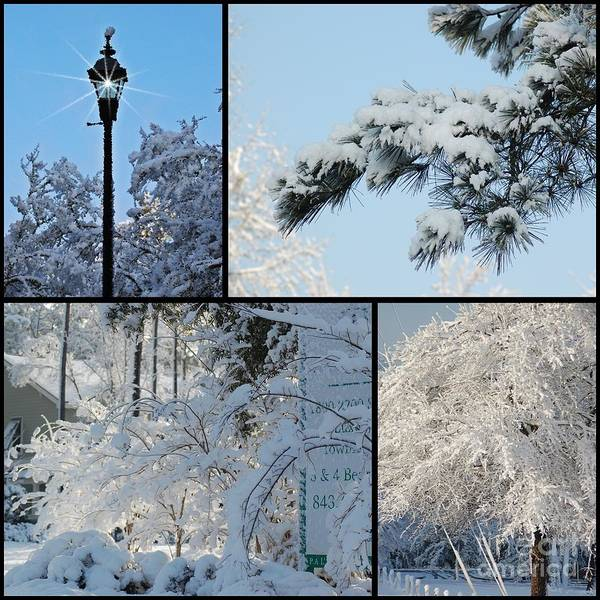 Photograph - Snow Scenes Of Charleston Sc by Donna Bentley