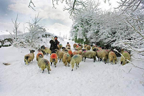 Grassington Photograph - Snow Shepherd, Grassington by Chris North