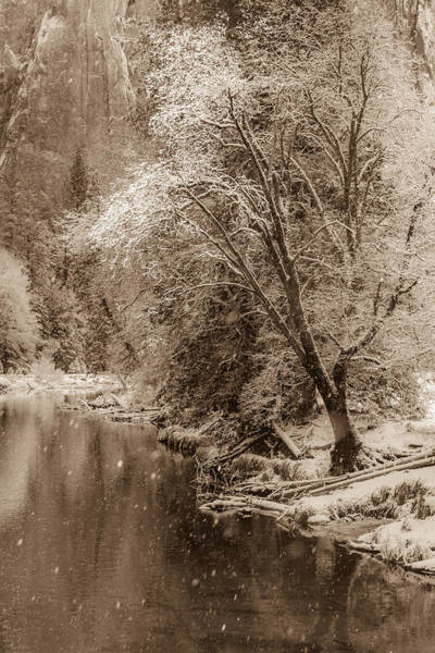 Wall Art - Photograph - Snow Softly Falling On The Banks Of The Merced River by Bridget Calip