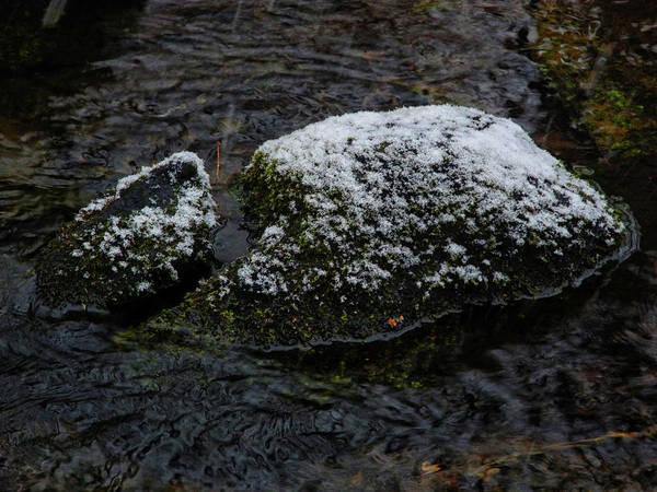 Photograph - Snow Strikes The Moss by Raymond Salani III
