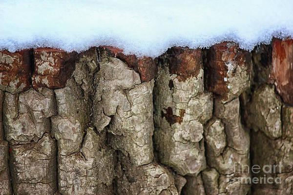 Photograph - Snow Stump by Karen Adams