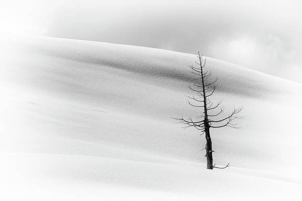 Photograph - Snow Surrounds Tree by Jim Thompson