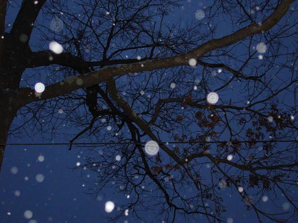 Wall Art - Photograph - Snow Through Branches by Dahlia Tumavicus