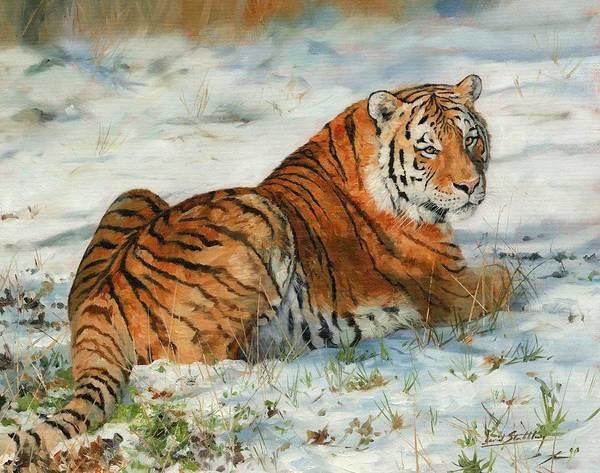 Siberian Tiger Wall Art - Painting - Snow Tiger by David Stribbling