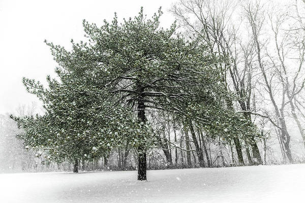 Photograph - Snow Tree Along The Maumee River by Michael Arend