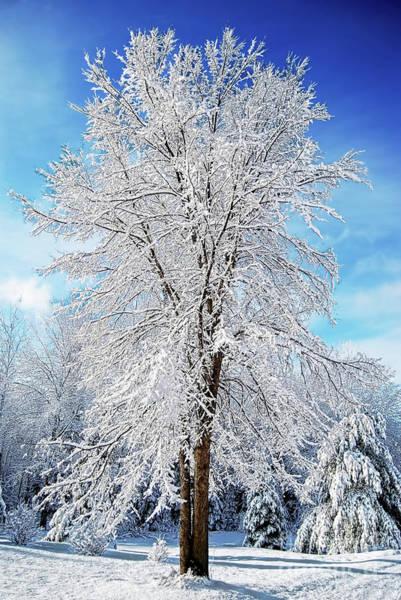 Photograph - Snow Tree  by Christina VanGinkel