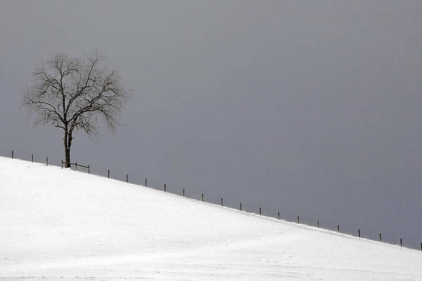 Photograph - Snow Tree by Ken Barrett