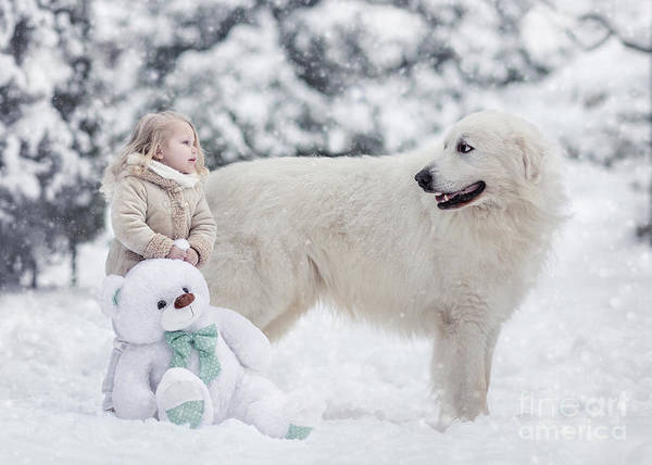Great Pyrenees Photograph - Snow White by Andy Seliverstoff