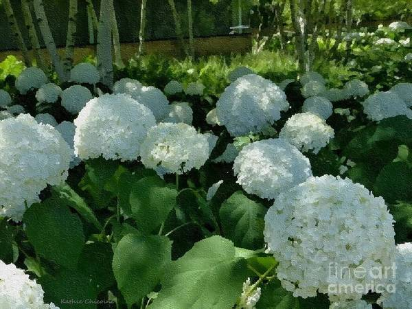 Photograph - Snowballs In Summer by Kathie Chicoine