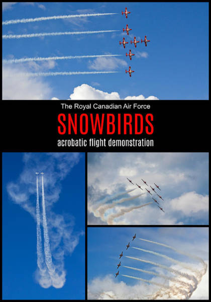 Photograph - Snowbirds Collage 2 by Tatiana Travelways
