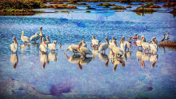 Photograph - Snowbirds by John M Bailey