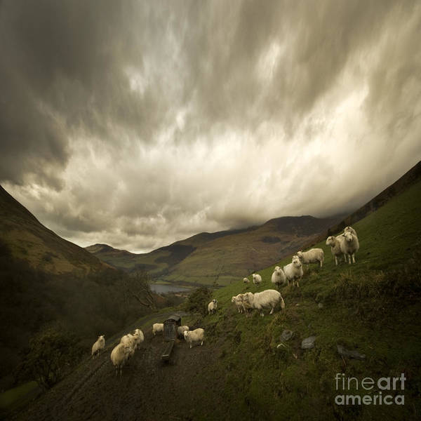 Wall Art - Photograph - Snowdonia by Angel Ciesniarska