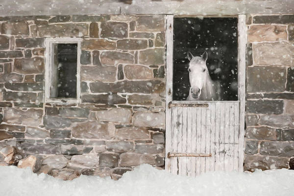 Wall Art - Photograph - Snowed In by Lori Deiter