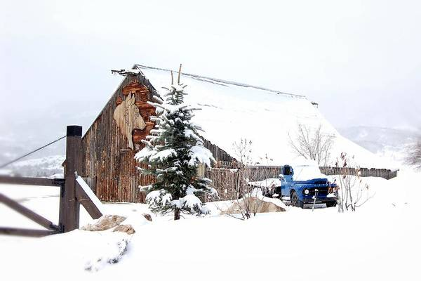 Barn Snow Painting - Snowed In by Shannon McMannus