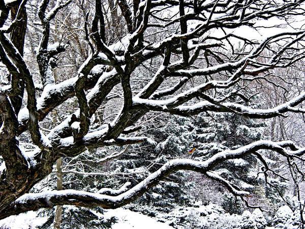 Wall Art - Photograph - Snowfall And Tree by Elena Elisseeva
