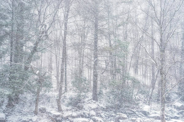 Photograph - Snowfall In Monongahela National Forest by Thomas R Fletcher