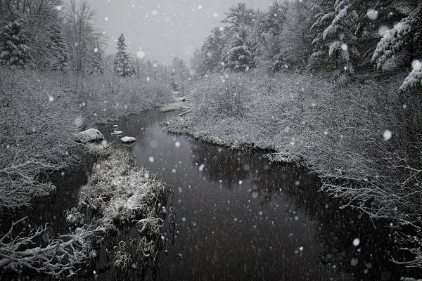 Photograph - Snowfall On Boot Creek by Dale Kauzlaric